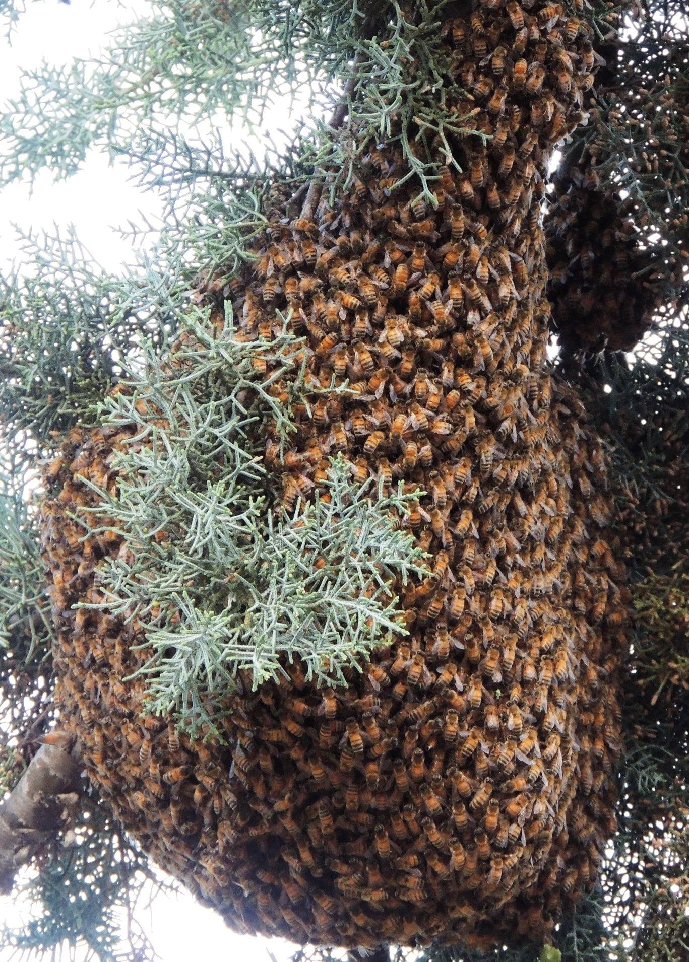 Swarm from Mocassin Reservoir